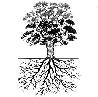 oak tree diagram oak island diagram